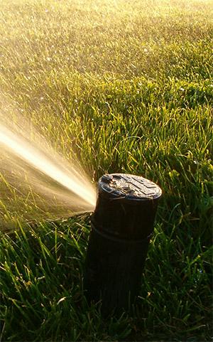 Gardening tips from ERWSD