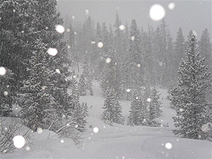 Snowpack Data